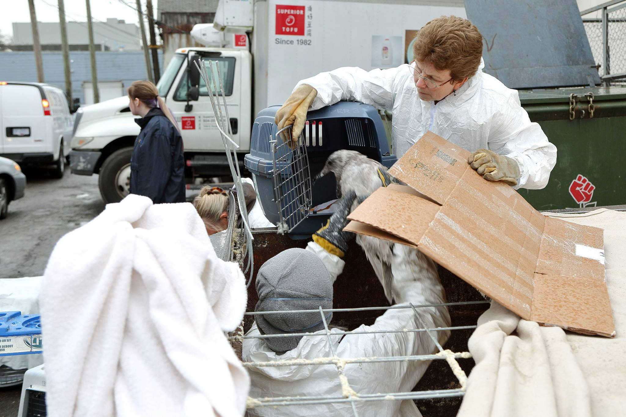 Image: Wildlife Rescue Association of B.C.