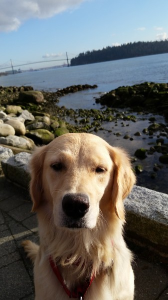 Shelter resident Jessa spent hours with Rocky on the seawall, getting socialized.