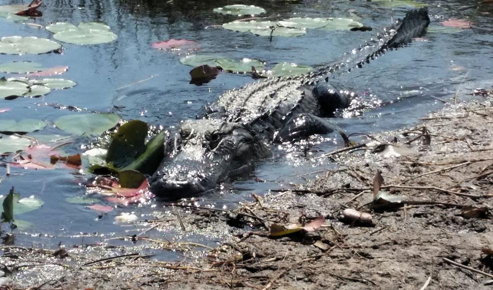 Everglades. (Guillermo Serrano)
