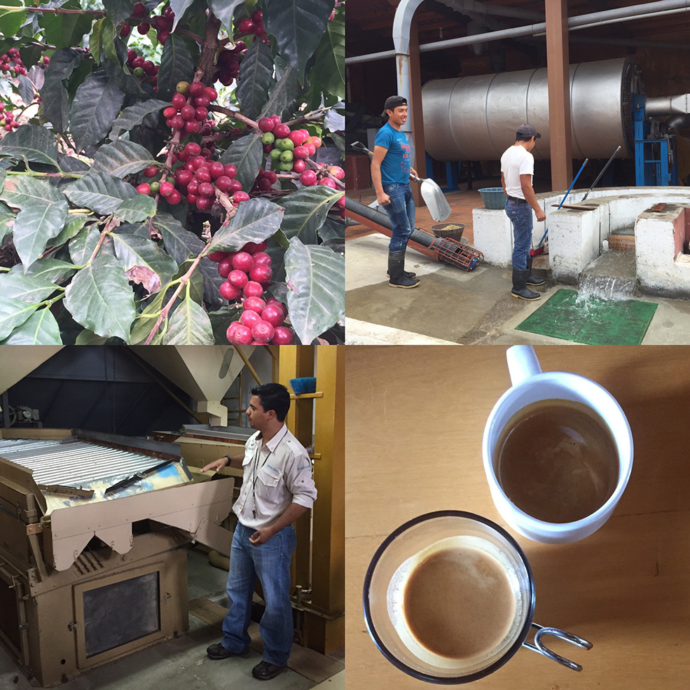 From plant to cup on a coffee plantation tour (Dana Kelly)