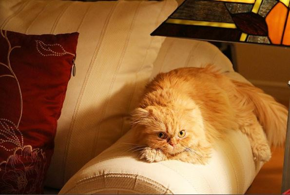 Leo is a charming and affectionate cat. And he's watching you. (Niki Sadeghi)
