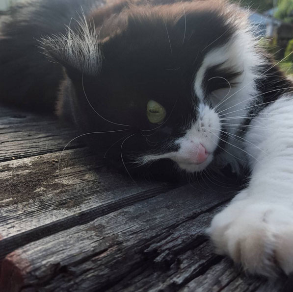 Could Nikola Tesla be the most Vancouver name for a cat? (Jamieson McCormack)
