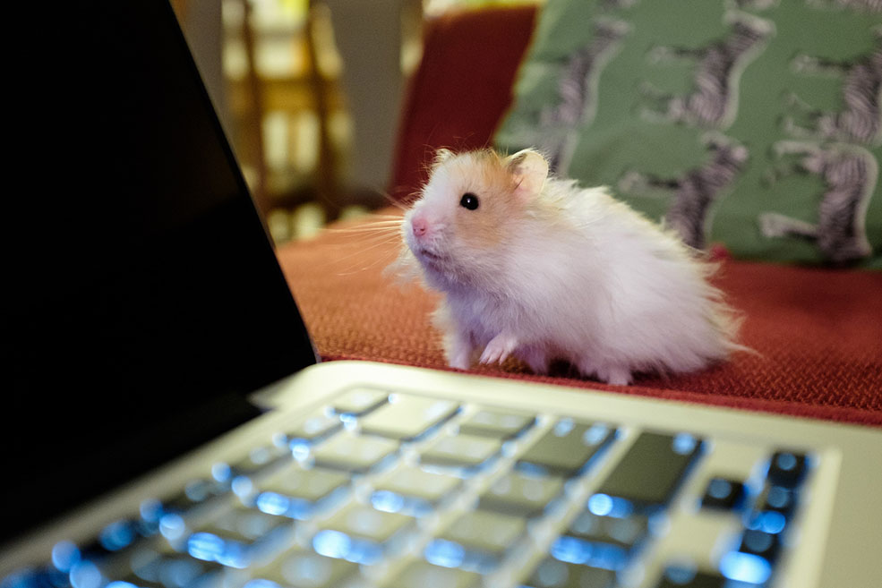 To get started, here's a picture of my own amazing pet, Tyler the hamster. (Conrad Olson)