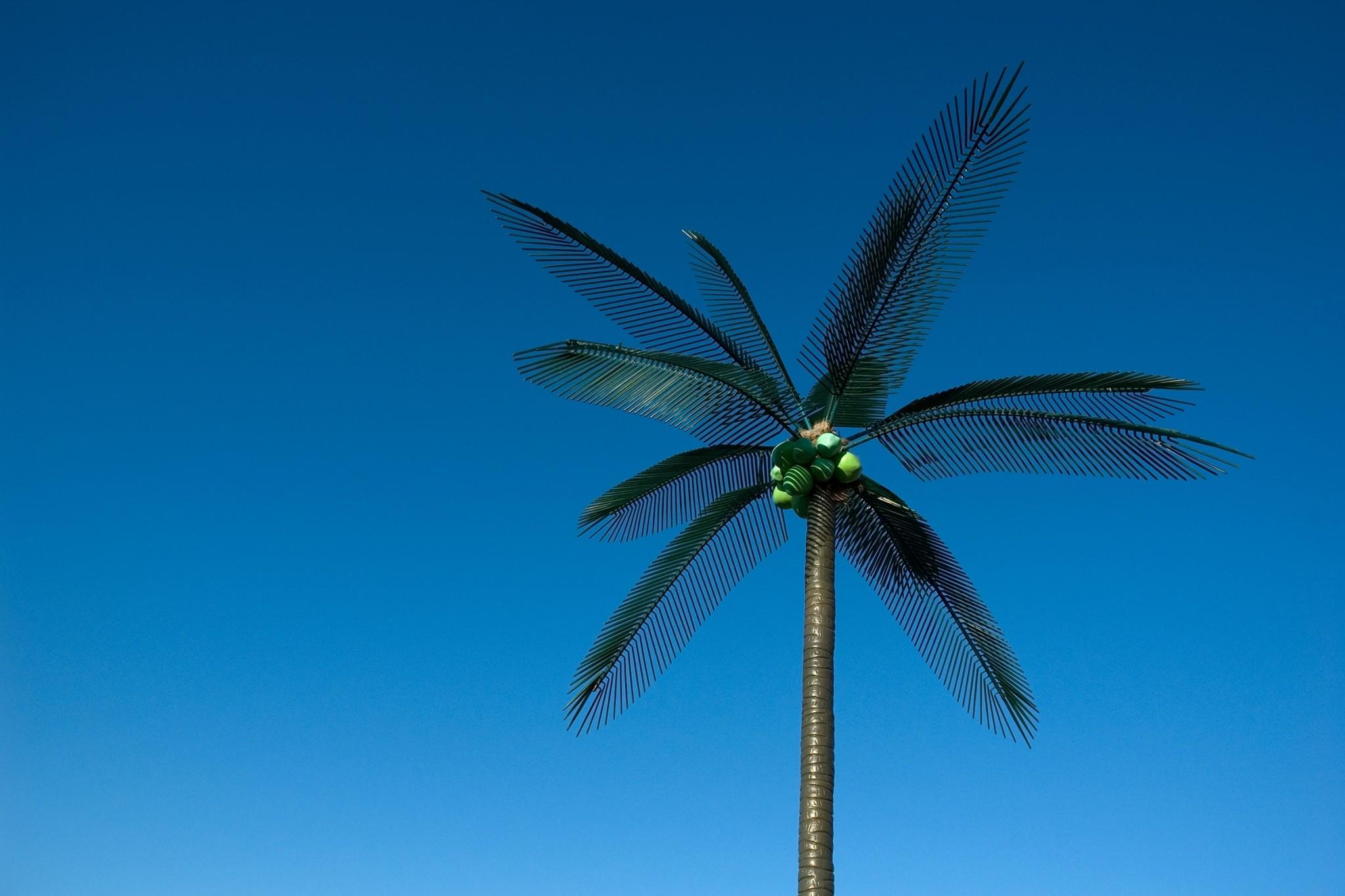 fake plastic trees / Image: Capture Photography Festival