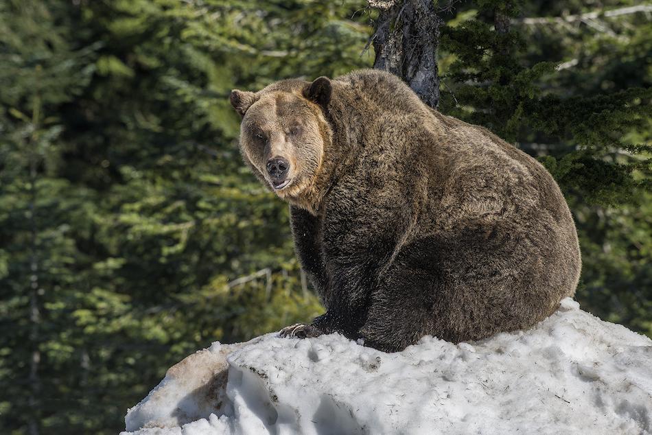 Image: Grouse Mountain Resort