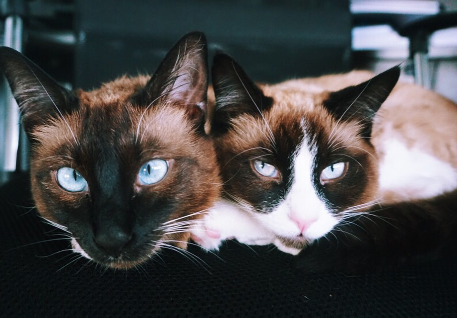 Shuriek and Mila now have a loving home in Vancouver (Stanislava Ludmilin)