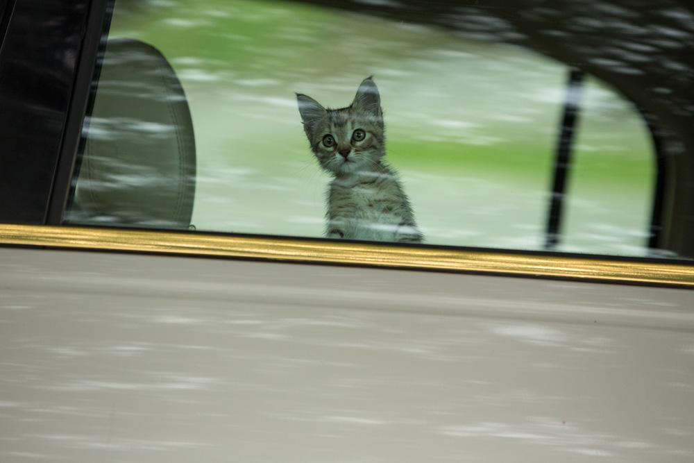 Keanu - the cutest cat in the world