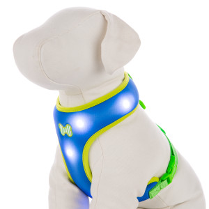 Top Paw Dog-E-Glow Comfort LED Bone Dog Harness, courtesy PetSmart.