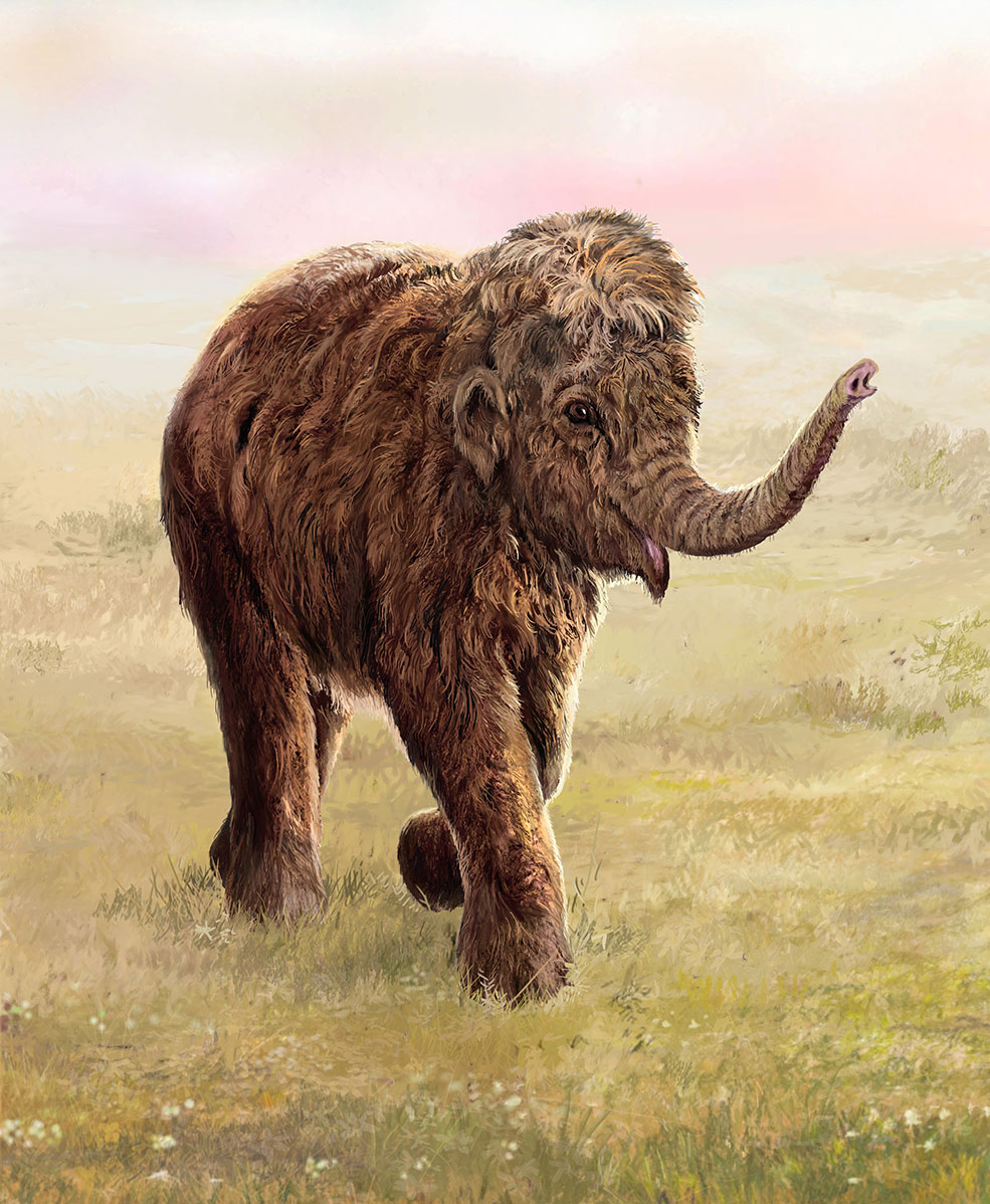 An artist's rendering of what Lyuba might have looked like while alive. Lyuba is the best-preserved baby mammoth ever discovered and is the centerpiece of Mammoths: Giants of the Ice Age. (Illustration by Velizar Simeonovski © The Field Museum)