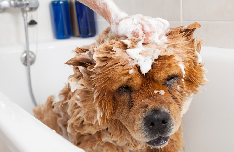 Giving a lovely dog a bubble bath, via Shutterstock.